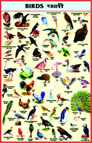 Charts Birds
