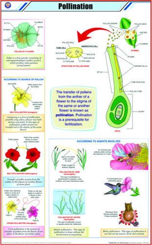 Charts Botany