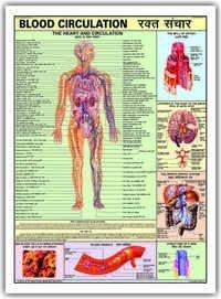 Charts Human Physiology