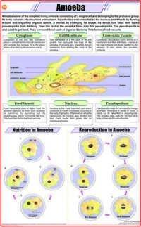 Charts Zoology