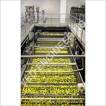 Amla Sorting Conveyor