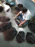 Raw Human Hair Weft