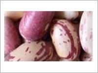 Beans Porotos