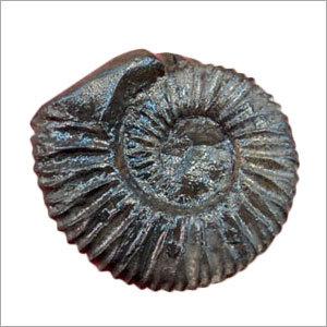 Shaligram Stone