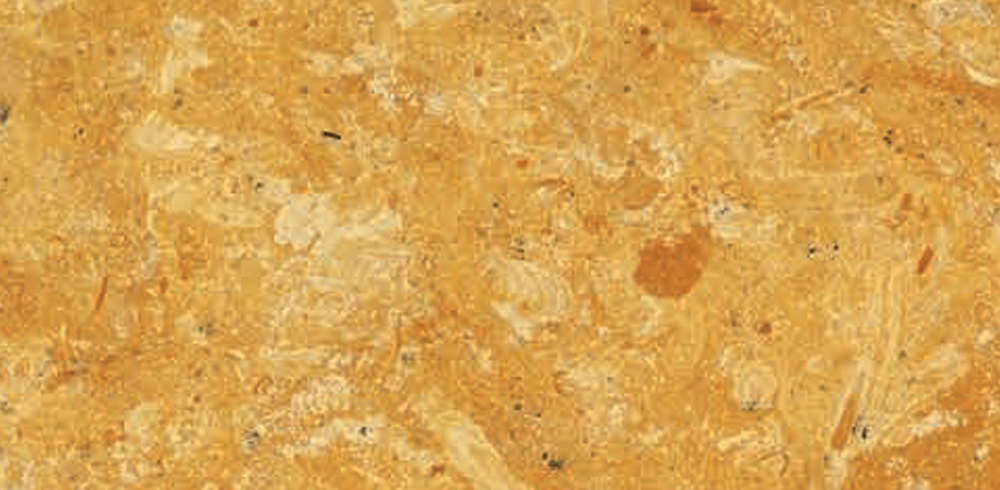 Fossil Gold Marble