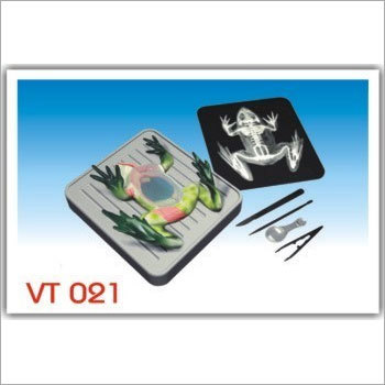Simulated Frog Dissecting kit (VT021)