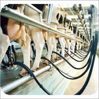 Dairy Consultancy Services