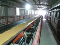 Belt Conveyor for Grain