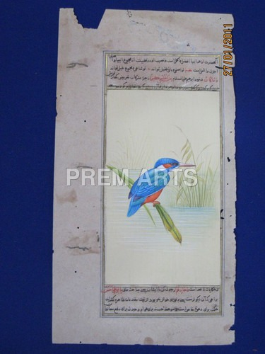 Kingfisher Painting on Paper