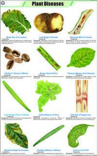 Plant Diseases Chart