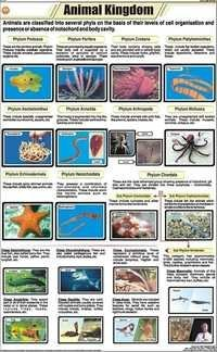 Animal Kingdom Classification Chart
