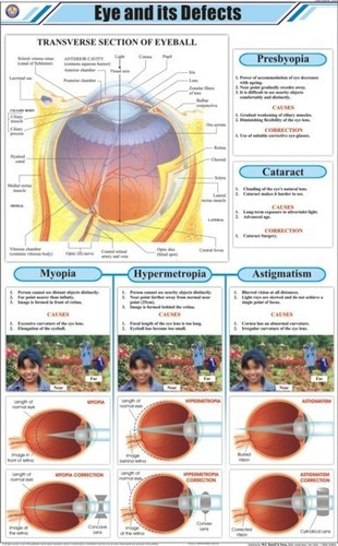 Eye and its Defects Chart