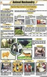 Animal Husbandry Chart