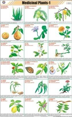 Medicinal plants-I Chart