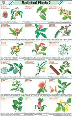 Medicinal Plants-II Chart