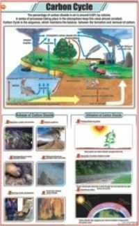 Carbon Cycle Chart