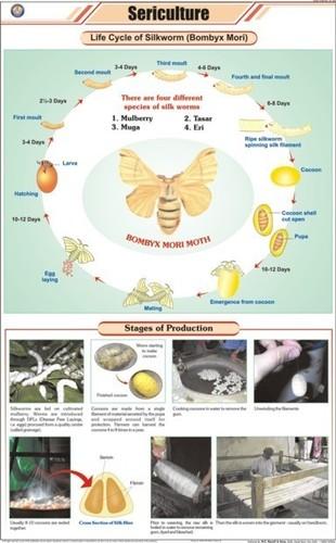 Sericulture (L. H. Silkworm) Chart