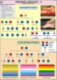 Pedigree Analysis-4 Chart