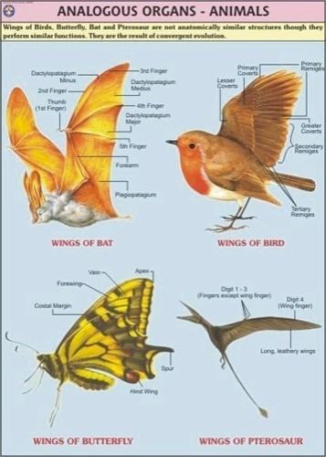 Animal Analogous Organs Chart