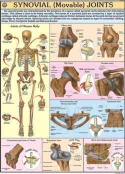 Movable Joints Chart