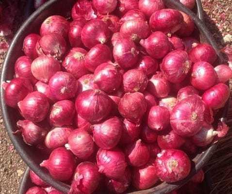 Big Red Onion