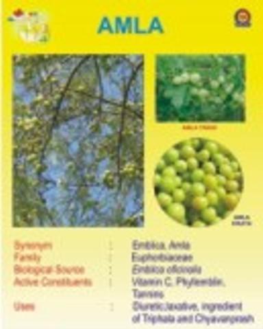 Botanical Chart
