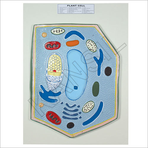 Plant Cell Board Model