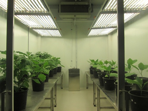 Modular cold room for Plant Growth