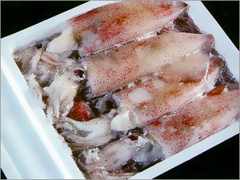 Frozen Squid
