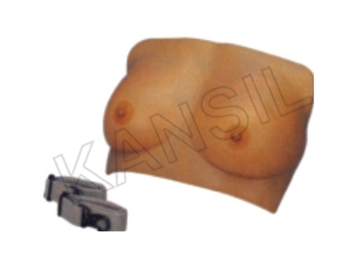 Breast Examination Model