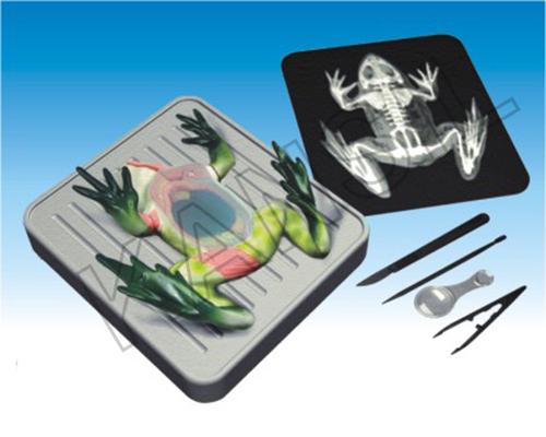 Frog Dissetion Kit Model