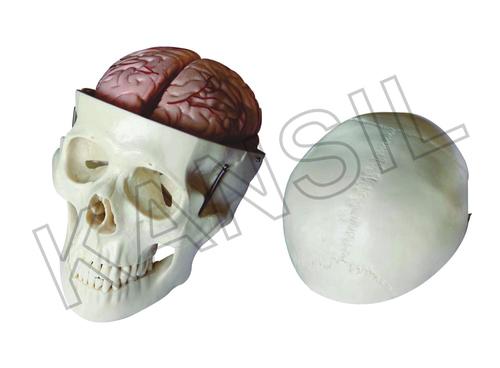 Skull Model with 8 Parts Brainn Model
