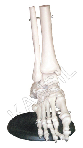 Foot Joints Model