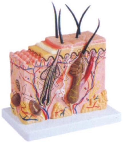 Skin Block Model