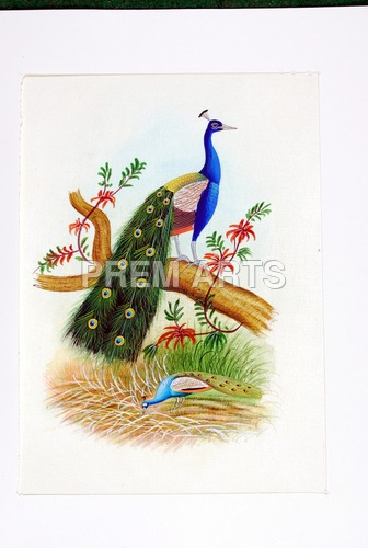 Peacock Painting on Clothe
