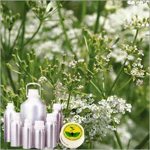 Caraway Egypt Oil