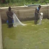 Fish Farming Production