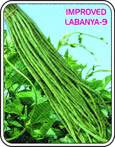 IMPORTED LABANYA - 9