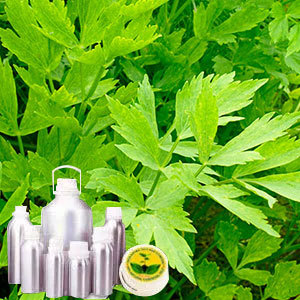 Lovage Leaf Oil
