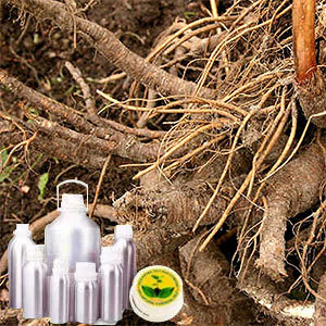 Lovage Root Oil