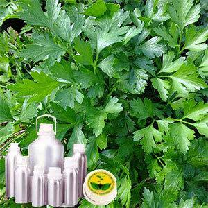 Parsley Leaf Oil