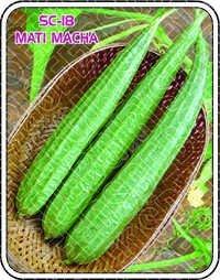 SC-18 MATI MACHA