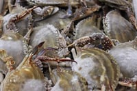 Live and frozen crab