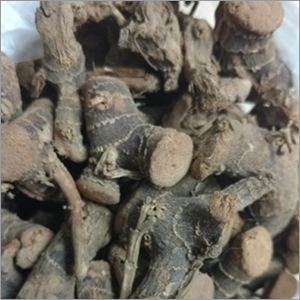 Lesser Galangal Root