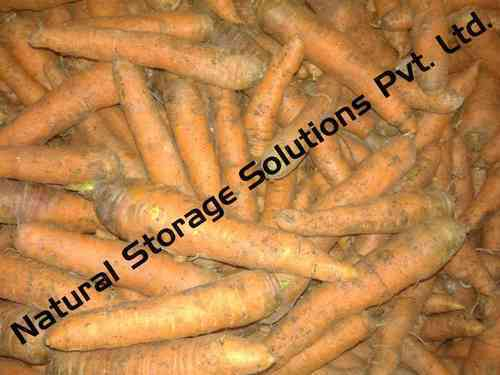 Carrot Cold Storage