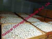 Garlic Cold Storage