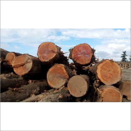Soft Wood Logs