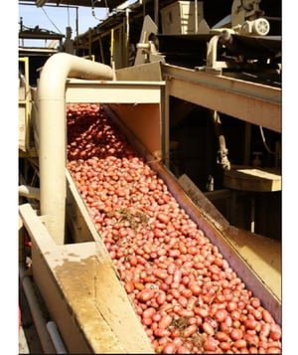 Flat Food Belts Conveyor