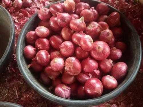 Big Fresh Onion