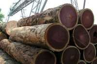 Rose Wood Logs